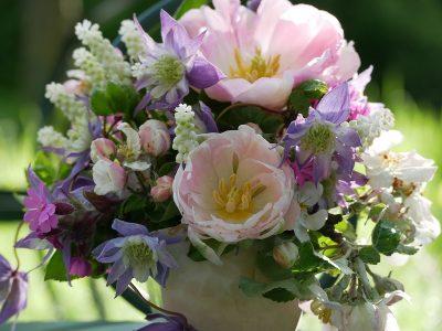 Frühjahrsblühende Clematis können gut mit Blumenzwiebeln wie Tulpen und Muscari kombiniert werden