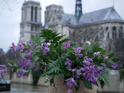 Clematis als Schnittblume im Einkaufskorb vor Notre Dame de Paris