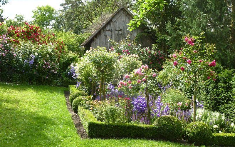 Garten Niemela - Rosenblüte