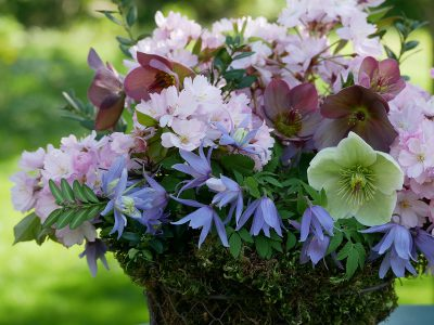 Strauß mit Clematis alpina, Blüten einer Zierkirsche, Helleborus Ice 'n Roses Rose und White
