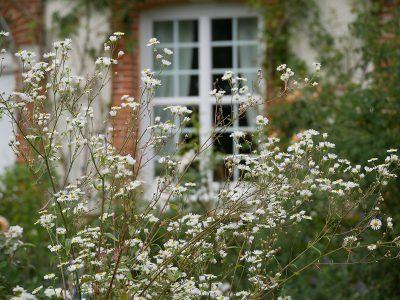 Astern zieren im Herbst die Beete im formalen Garten