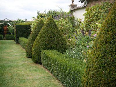 Buchshecken und Eibenkegel formen das Grundgerüst des Gartens