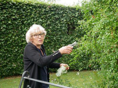 Les Jardins d'Angélique Mme Gloria Lebellegard mit Rose 'Souvenir d'Angélique'