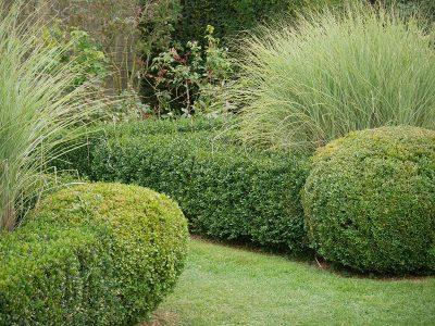 Gräser bringen im Herbst Bewegung in den formalen Garten