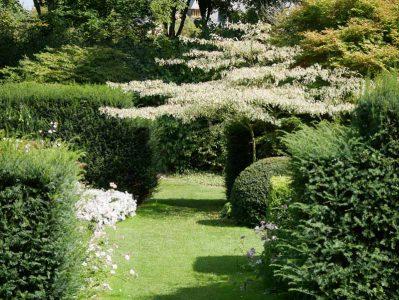 Les Jardins du Pays d'Auge - Ein Pagodenhartriegel als Eyecatcher