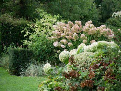 Les Jardins du Pays d'Auge - Hortensienpracht