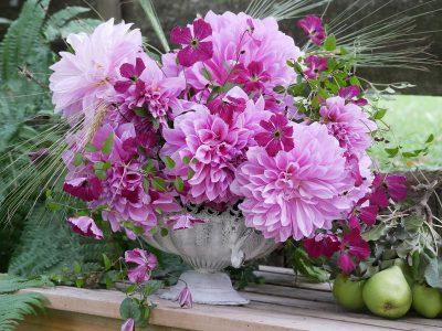 Strauß mit Clematis viticella Rubra und Dahlie Lavender Perfection