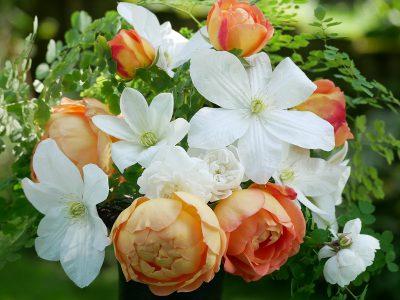 Clematis Shirayukihime mit den Rosen Lady of Shalott und Snow Ballet