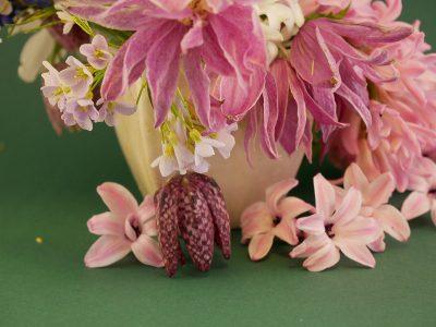 Clematis macropetala Ballet Skirt mit Hyaznthen und Fritillaria meleagris