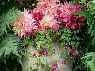 Dahlien 'Penhill Watermelon', 'Penhill Dark Monarch', 'Burlesca' im Strauß mit Clematis