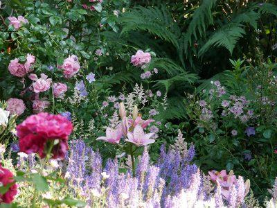 Rose 'Rouge Meilove' und 'Rosenfee', Salvia 'Blauhügel', Astrantia 'Buckland', Astilbe 'Younique Salmon'