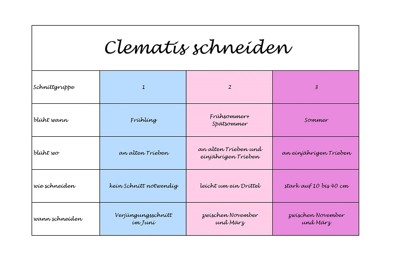 Clematis Schneiden Grundlagen