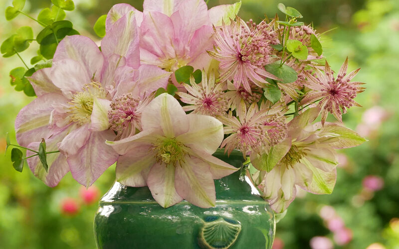 Strauß mit Clematis Innocent Glance und Astrantia major Buckland