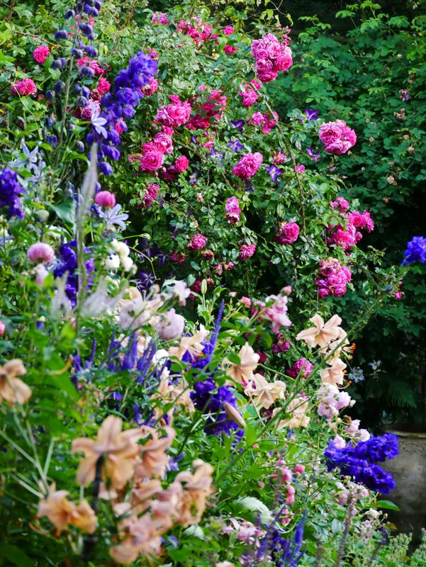 Rose Laguna mit dunkelblauem Rittersporn