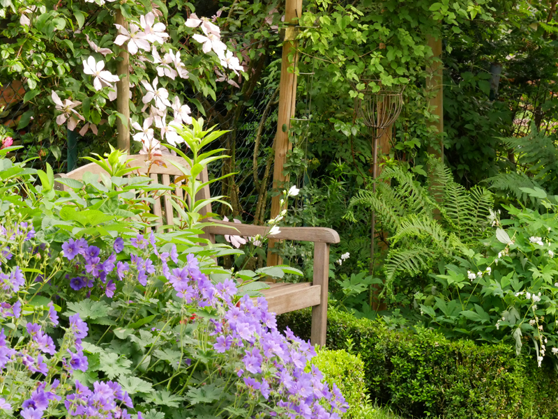 Clematis Ai-Nor und Geranium Rosemoor