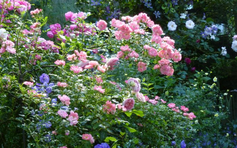 Rose Ferdy