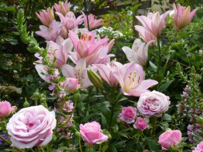 Lilie Moleto und Rose Crescendo