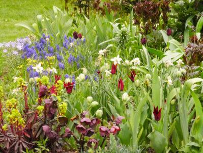 Tulipa Sarah Raven, Muscari, Narcissus Sailboat